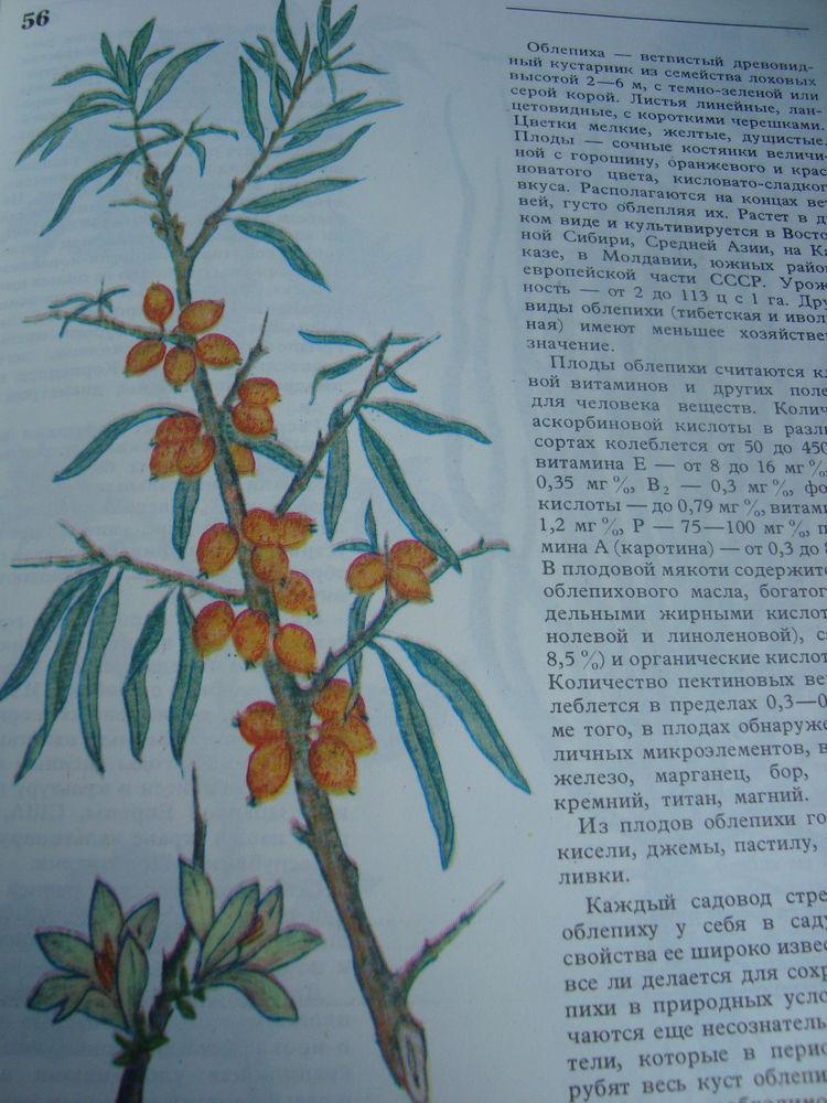 книга по кулинарии, съедобные растения, блюда из растений