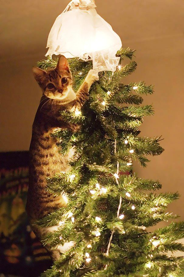 Christmas Cats! And a Little About the Safety of Pets During the Holidays, фото № 15