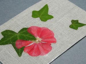 Как сушить растения для гербариев и других коллекций. Ярмарка Мастеров - ручная работа, handmade.