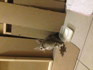 Котёнок в добрые руки! | Ярмарка Мастеров - ручная работа, handmade