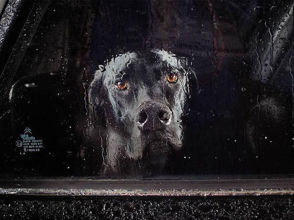 Молчание собак в автомобилях | Ярмарка Мастеров - ручная работа, handmade