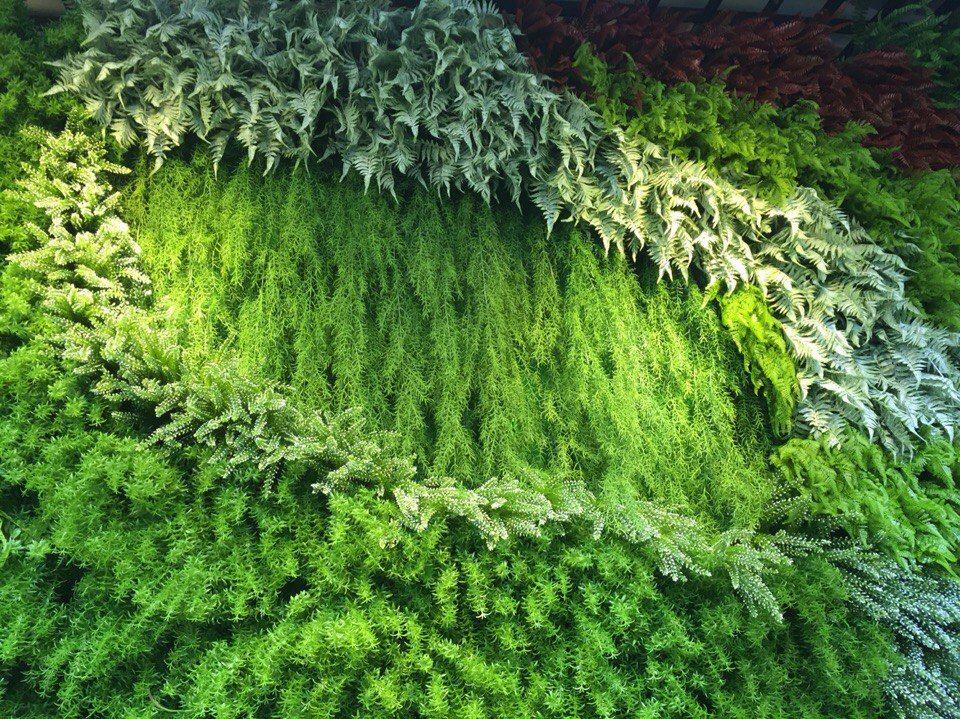 зеленая стена, суккуленты