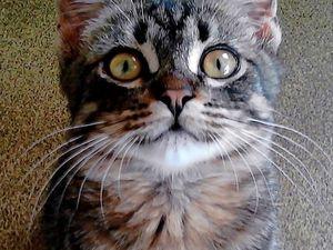 """""""Котик"""". О рюкзачке, вышивке и маленьком сорванце. Ярмарка Мастеров - ручная работа, handmade."""