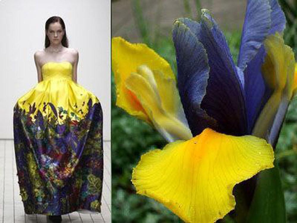 Природа — лучший дизайнер одежды