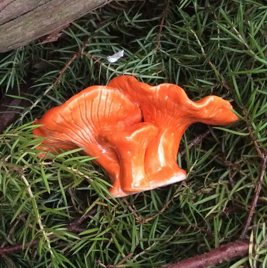 грибы керамические