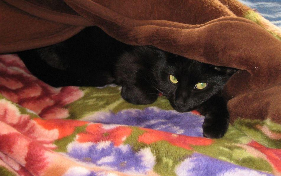 Кот и полтергейст., фото № 3