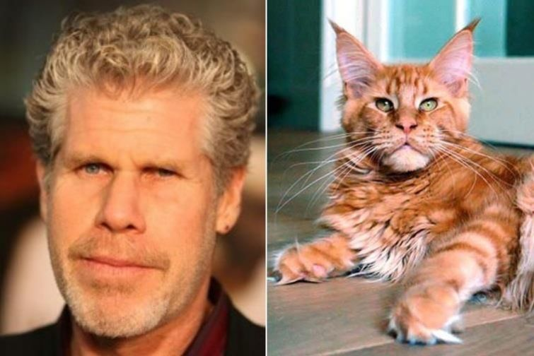 нас сходство кошек и животных фото особенностям относится