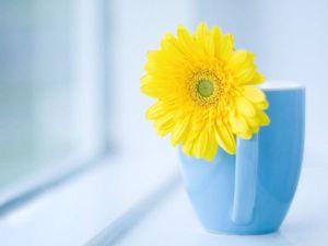 "Валяем цветок ""Гербера"". Ярмарка Мастеров - ручная работа, handmade."