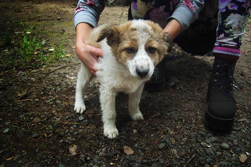 аукцион, помощь животным, помощь, благотворительный аукцион