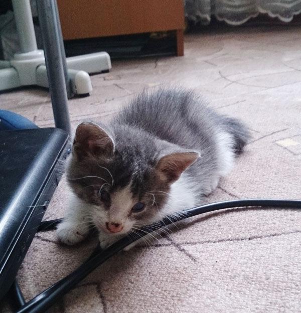 подобранный котенок
