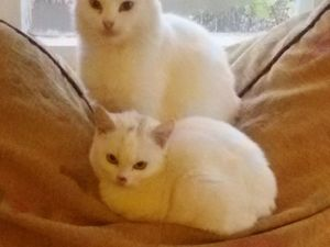 Кошкин дом, или благотворительная акция в помощь кошкам. Ярмарка Мастеров - ручная работа, handmade.