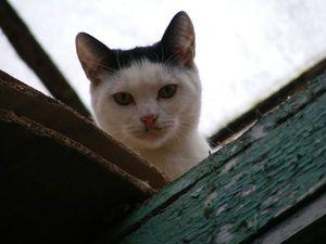 Акция-аукцион в поддержку кошек под бульдозер из-под оранжерей ВДНХ | Ярмарка Мастеров - ручная работа, handmade