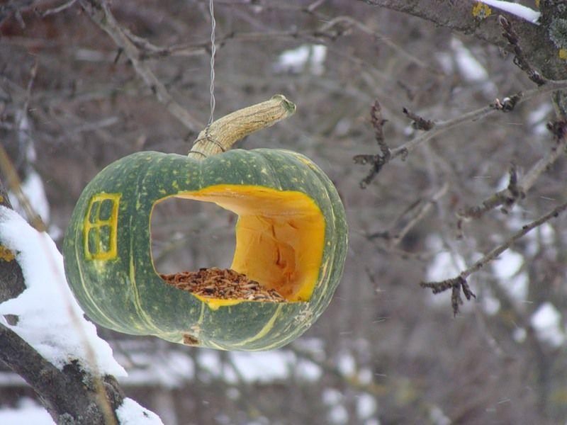 кормушка для птиц, окрас перьев птиц