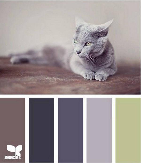Черпаем вдохновение цветом в мире котиков... На третью палитру без смеха смотреть не могу!