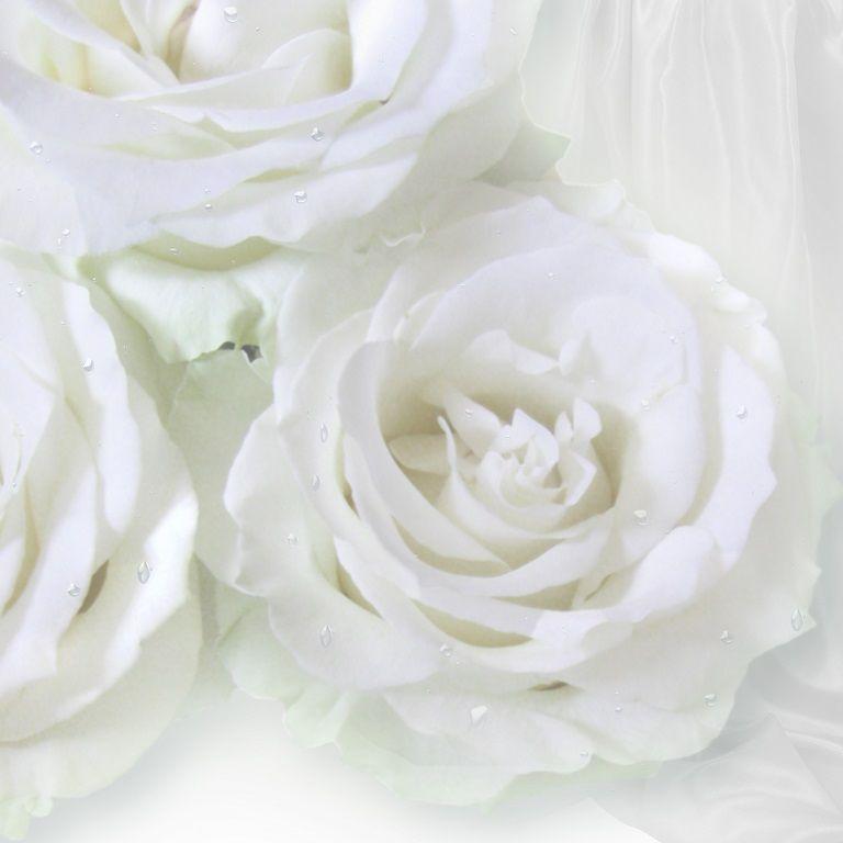 картина, фотокартина, картина цветов, картина цветы, белые цветы, белые розы, белый