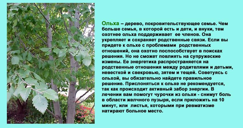 волшебство, дерево счастья