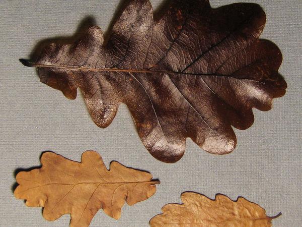 Как быстро законсервировать листья в глицерине | Ярмарка Мастеров - ручная работа, handmade