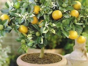 Волшебные свойства лимона. Ярмарка Мастеров - ручная работа, handmade.