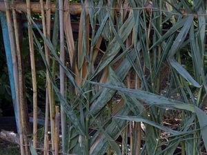 Мастерим облегченный забор из камышей. Ярмарка Мастеров - ручная работа, handmade.