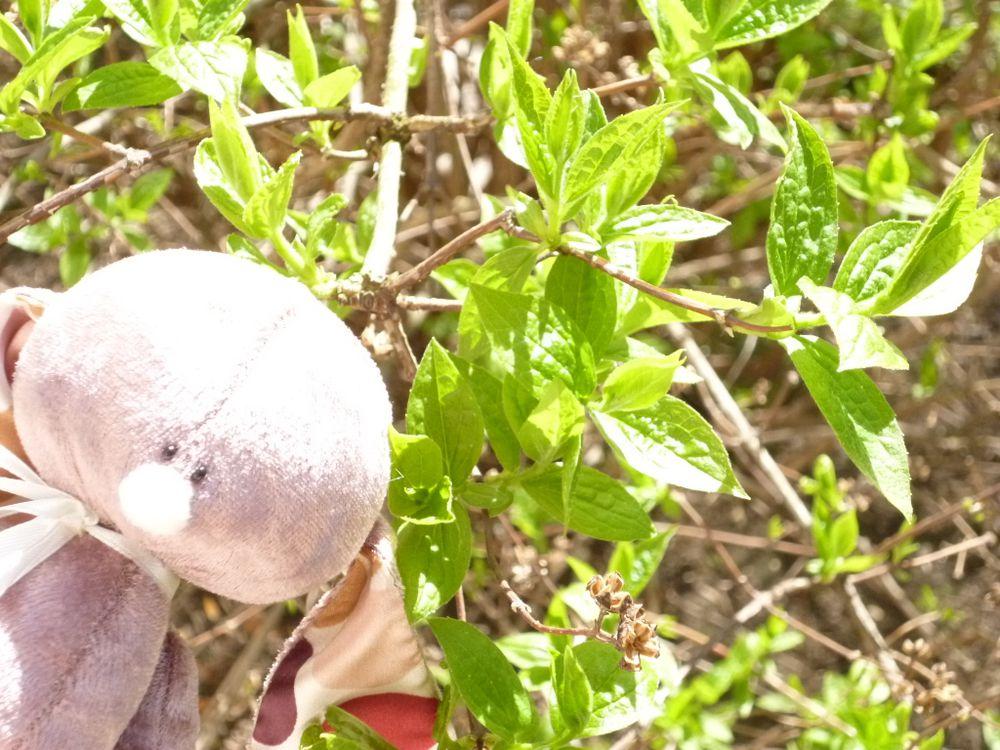 весна, зайчик, зеленый, солнце, листья, ветки, жасмин, коричневый, розовый