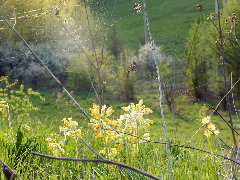 Цветущий край, Белгородчина., фото № 13