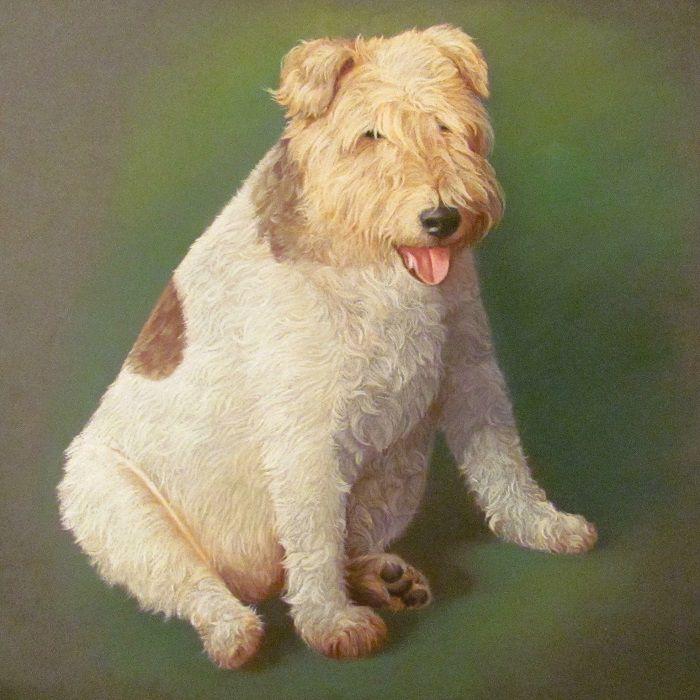 сильва, собаки, собака, история собаки