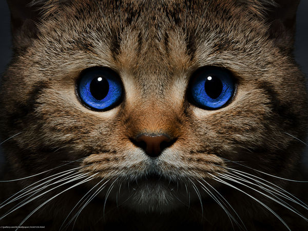 Кота бесплатно!!! | Ярмарка Мастеров - ручная работа, handmade