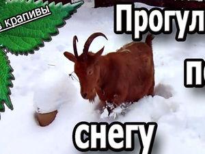 Прогулка по снегу. Коза Рыжуха. Домашние животные Все из крапивы. | Ярмарка Мастеров - ручная работа, handmade