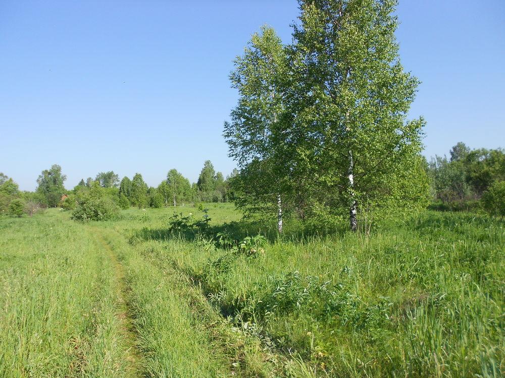 травы сибири