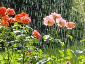 """Аукцион Открыт """"Лето жарит! Хочется дождя !"""". Ярмарка Мастеров - ручная работа, handmade."""