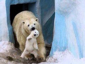 А в Вашей коллекции есть медведь из Столицы Сибири?. Ярмарка Мастеров - ручная работа, handmade.