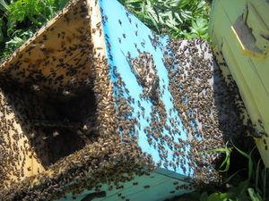 У пчёл тоже бывает новоселье. Ярмарка Мастеров - ручная работа, handmade.