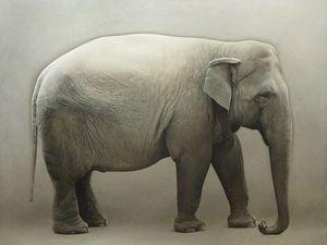 Акварели Marzio Tamer — синтез природы и искусства. Ярмарка Мастеров - ручная работа, handmade.