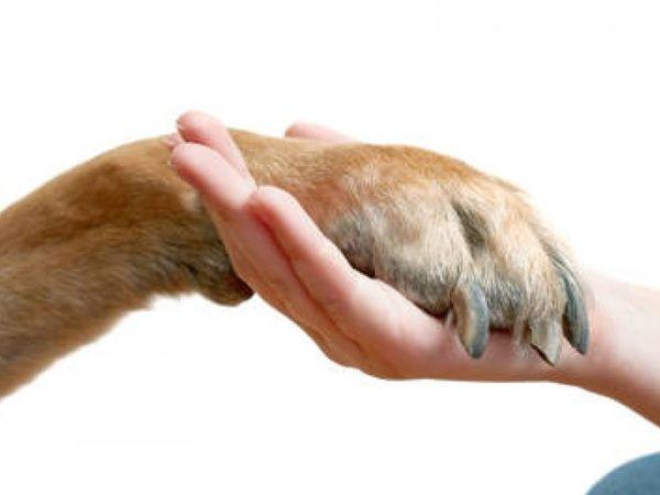 Как без страха и дискомфорта постричь когти собаке   Ярмарка Мастеров - ручная работа, handmade