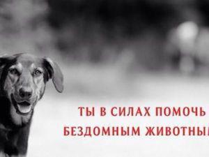 Liba Аукцион в поддержку бедомных животных | Ярмарка Мастеров - ручная работа, handmade