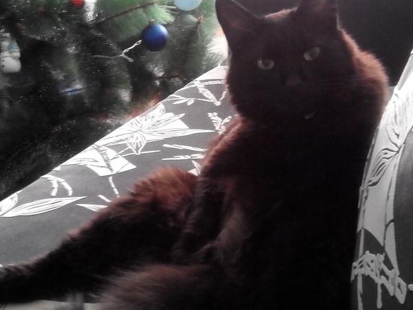 Новогодняя диверсия для любимого кота! | Ярмарка Мастеров - ручная работа, handmade