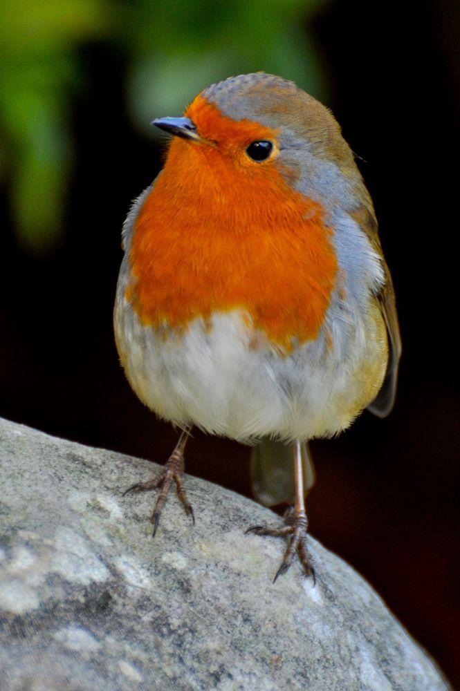Вот-вот взлетят: реалистичные вязаные птицы Jose Heroys, фото № 2