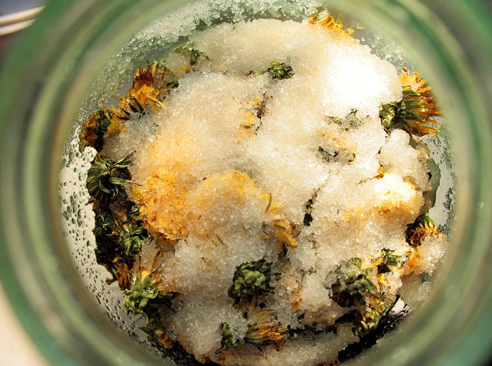 одуванчиковый мед, из цветков одуванчика