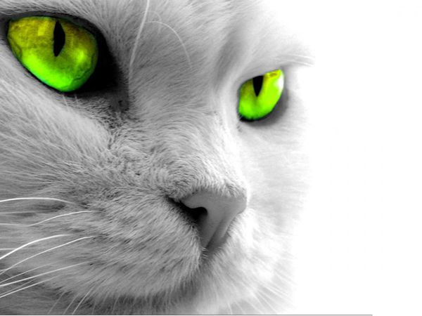 Все кошки капризны...   Ярмарка Мастеров - ручная работа, handmade