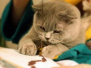 С днем вышивальщицы!. Ярмарка Мастеров - ручная работа, handmade.