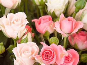 Милые, нежные, прекрасные, с 8 марта!. Ярмарка Мастеров - ручная работа, handmade.
