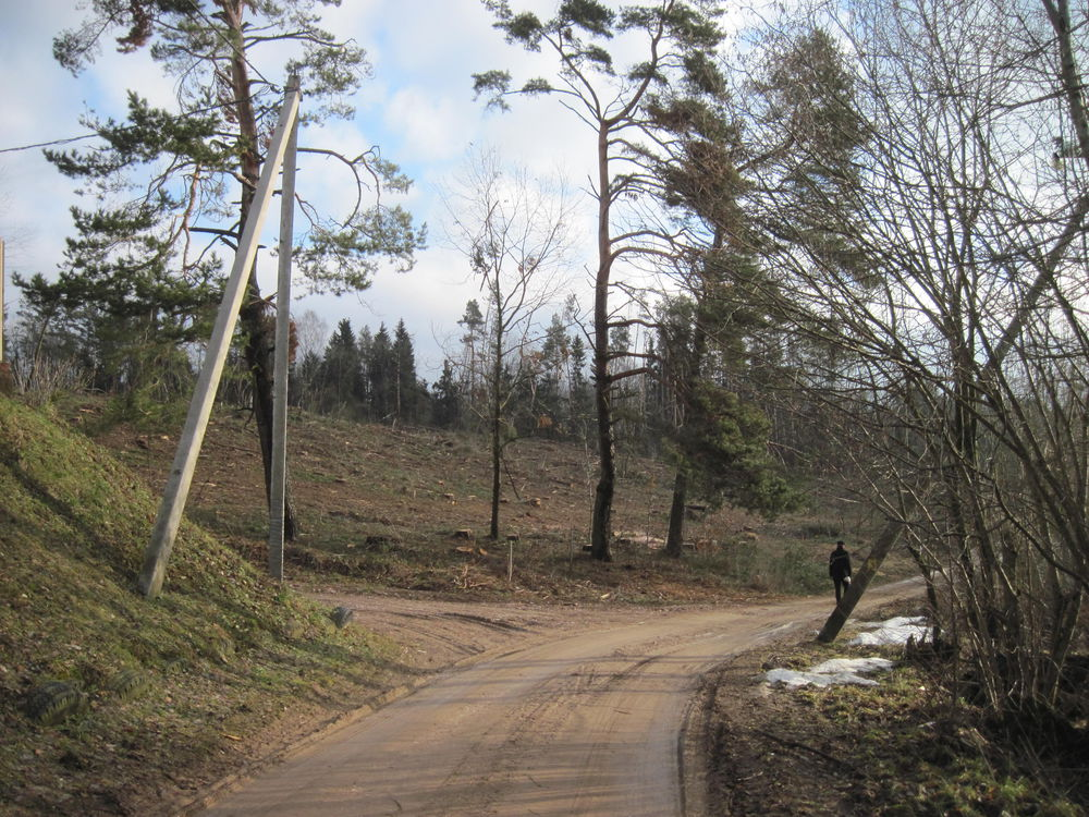 завалы леса