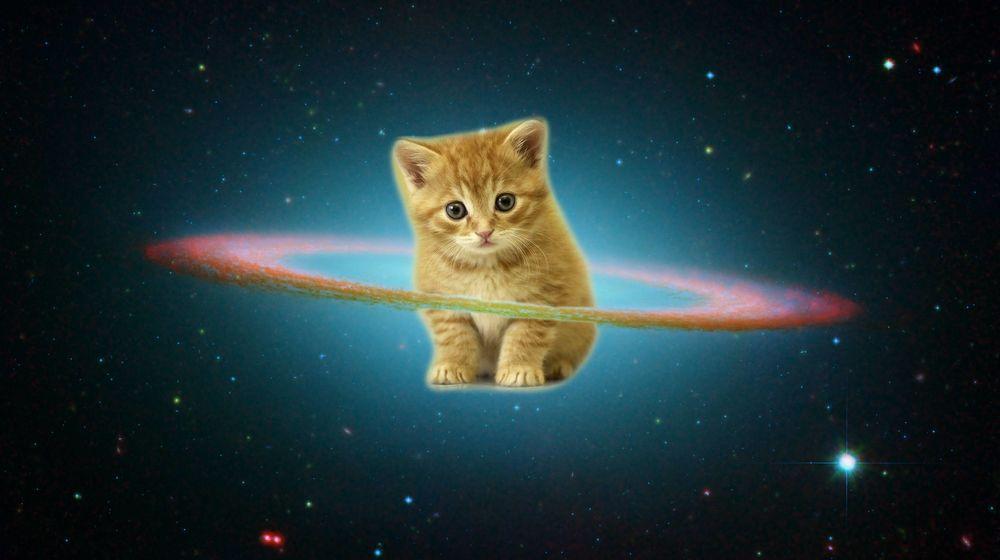 картинки с кошками в космосе желании