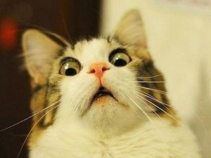 Всего понемножку. Сегодня — смешные кошки!. Ярмарка Мастеров - ручная работа, handmade.