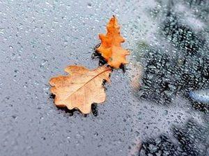Еще немного редкой красоты в дождливый осенний день.. Ярмарка Мастеров - ручная работа, handmade.