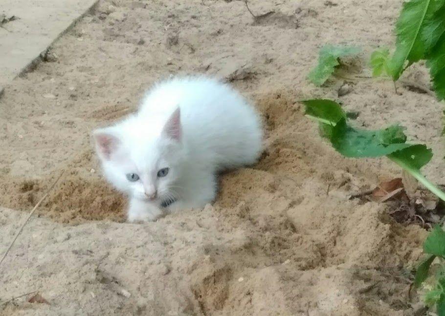 котики кошечки, серый котёнок