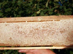 Мёд, немного истории. Ярмарка Мастеров - ручная работа, handmade.