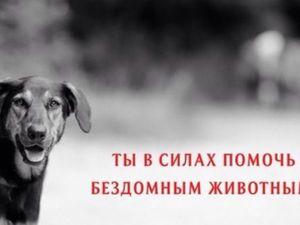 Благотворительный аукцион в помощь бездомным животным. Сбор лотов! | Ярмарка Мастеров - ручная работа, handmade