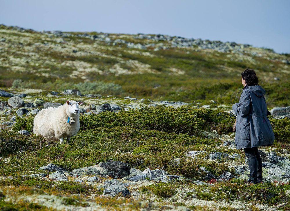 мария штрик, фестиваль, пряха, прядение, уроки прядения, мастер-класс по прядению, прялка, веретено, норвегия, овечка, овечки, овца, овечья шерсть, овчина, овцы, обучение прядению