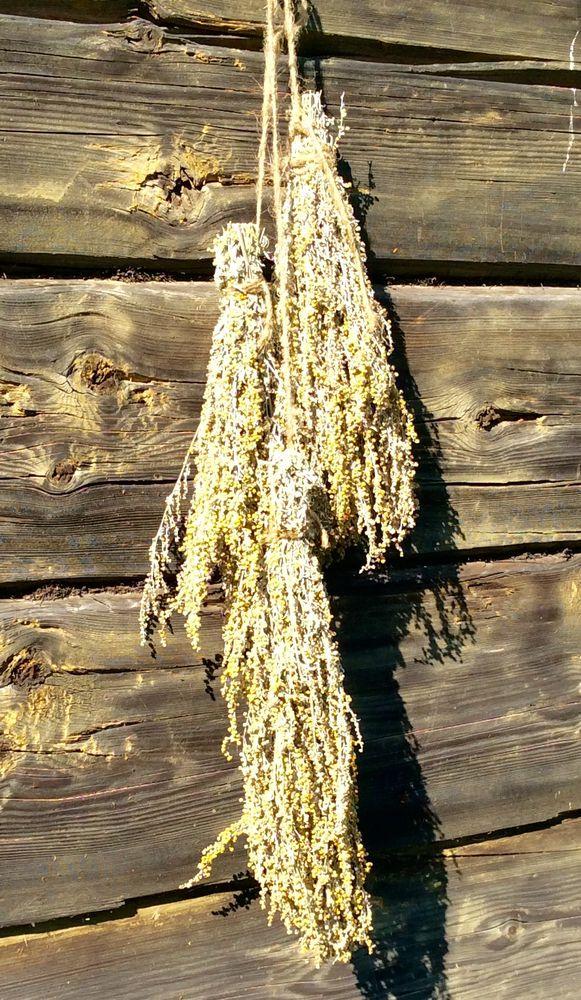 полынь, полынь серебристая, магия, магия полыни, свойства полыни, солнечные травы, лечение травами, травы, поколдуем, букет полыни